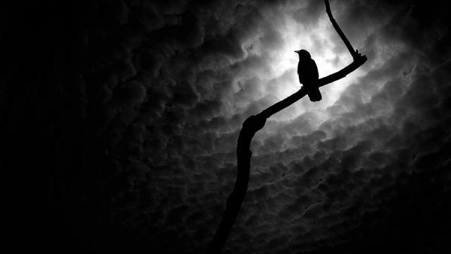corvid-at-night.jpg (640×360)