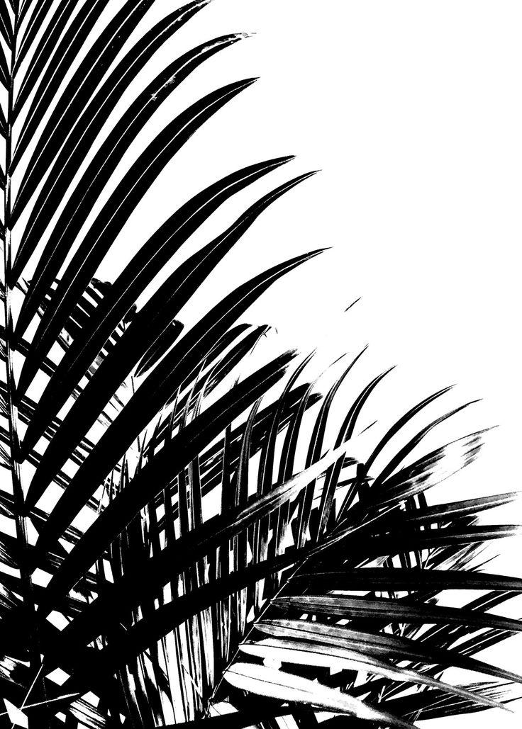 Palm Leaves II av Wintherland - Posters för dina väggar från Gallerix®