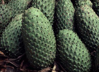 【トゲバンレイシ(Soursop) 】  原産国は西インド諸島。先ほど紹介し たバンレイシ(シュガーアップル)の仲 間で、バンレイシ科の中でもっとも重量のある種類になります。トロピカル な味がしておいしいとのこと。ジュー スやシャーベットにして食べることが多いようです。