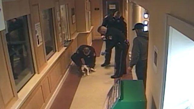 Video captures emergency responders saving choking puppyhttp://http://ift.tt/2D4ShrY