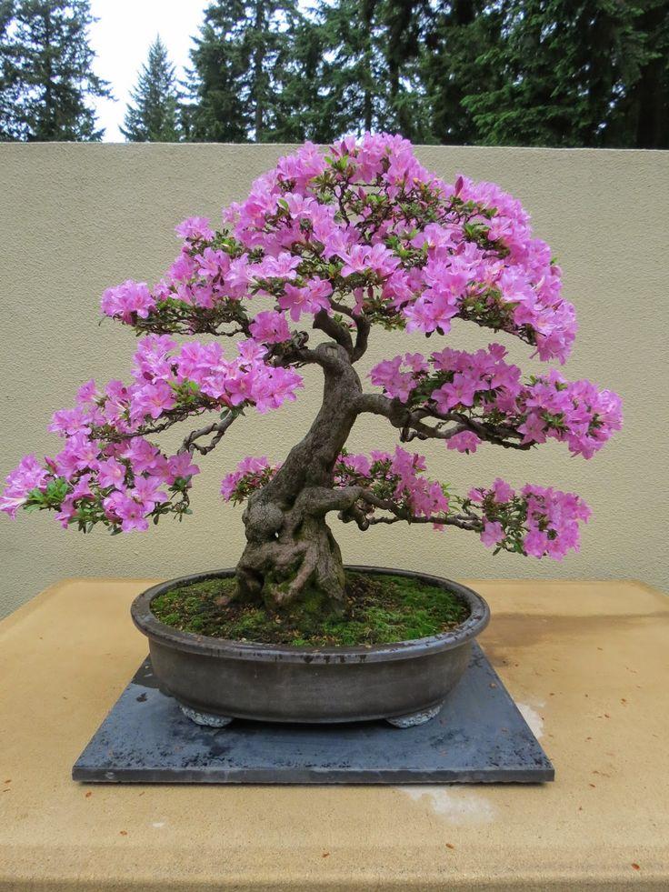 29 best images about bonsaj on pinterest play houses for Zen garden trees