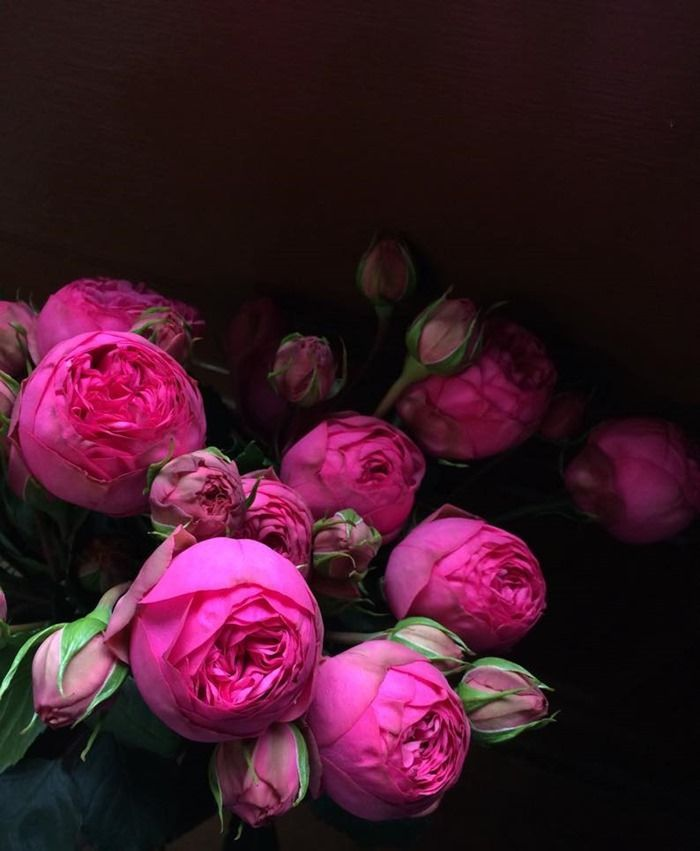 Hot Pink Peonies Order yours: http://www.rebelrebel.co.uk/orderflowers/ #Peonies #Florist