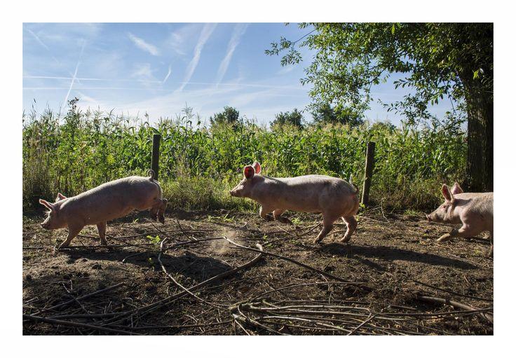 'We zijn blind voor wat een paardenmeisje snapt'  - De Standaard