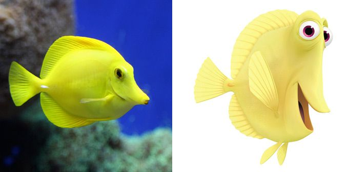 Real Fish Versus Finding Nemo Fish Finding Nemo Fish
