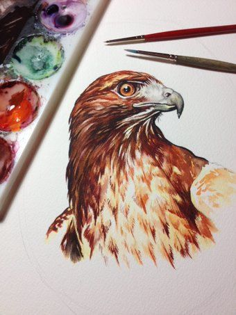 Original watercolour painting of a portrait of a Red Tailed Hawk. The most common hawk around, its still a treat seeing these perched along roadsides. The red tailed hawks call has been used in film and television as the call of Bald Eagle, or a soundbite to give the feeling of the majestic outdoors. When going on a long car ride, we often see how many Red Tails we can count during the trip. Try it! You may be surprised by just how many are out there. This was painted on aquarelle arches…