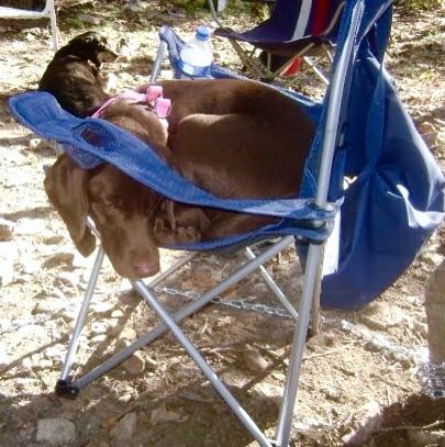 Doofus Dog Has To Have A Chair To Sit In Even On A