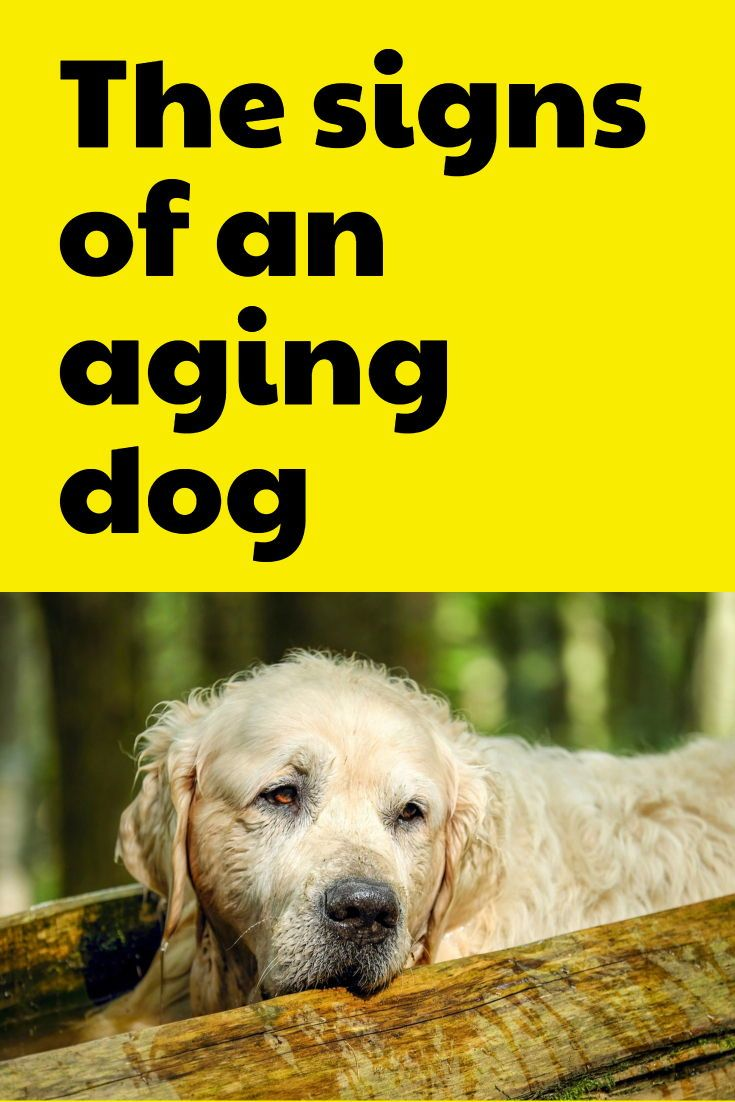 The Signs Of An Aging Dog Senior Dogs Have More Health Concerns
