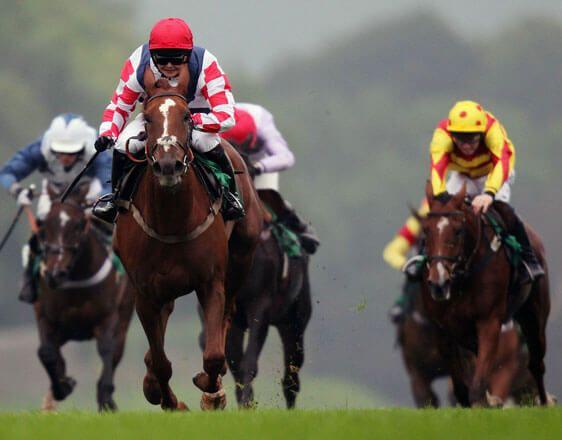 Horse betting 08 November