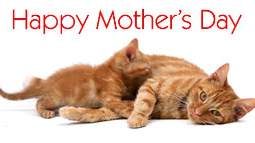 Happy Mothers Day Animated Gif Wishes - Best Animations