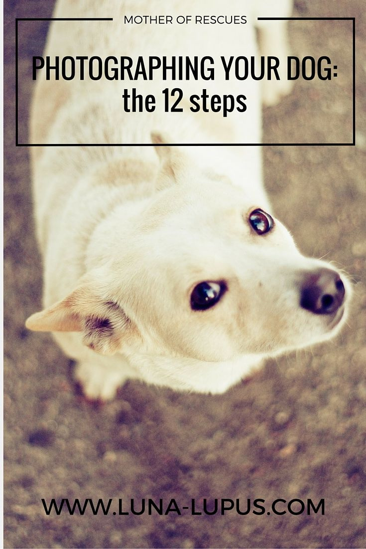 I present to you the 12 steps that will (eventually) lead to a perfect picture of your dog!