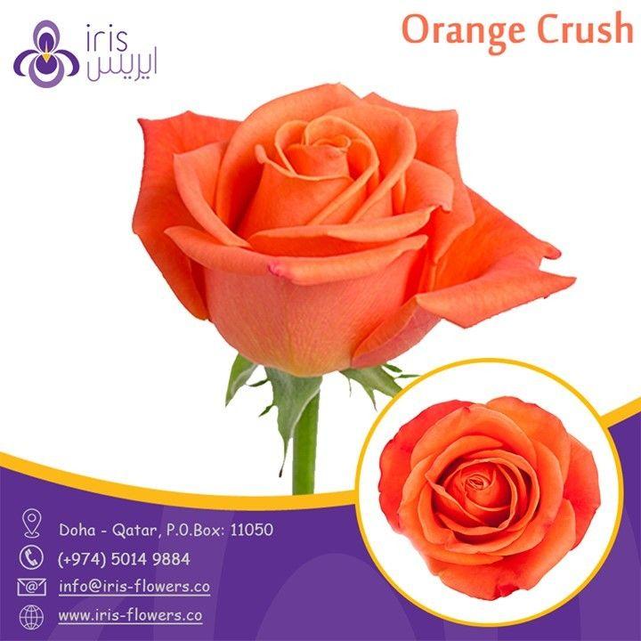 Roses Orangecrusht Flowers From Ecuador Florist Doha Qatar Irisflowersqa In 2020 Rose Florist Flowers