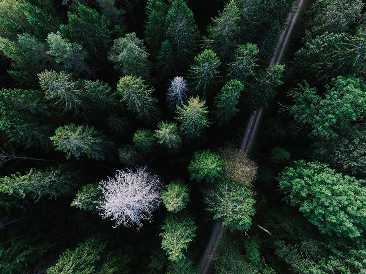 Drone Forest photo by Geran de Klerk (@geran) on Unsplash