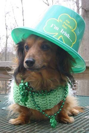 Irish DoxieParties Animal, Weenie Dogs, Dachshund, Happy Day, Dogs Costumes, Irish Set, St Patricks Day, Wiener Dogs, Happy St
