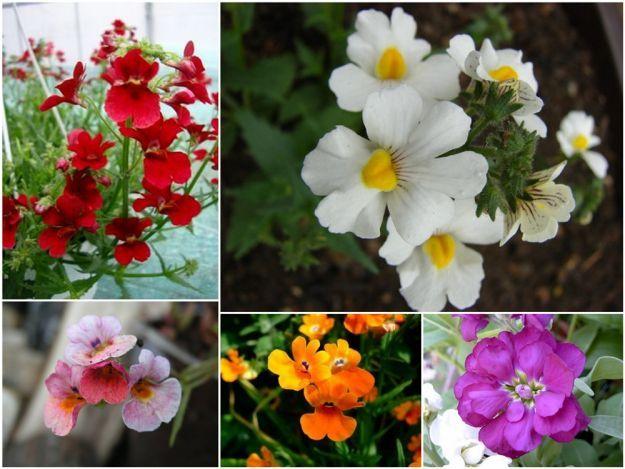 Jakie Kwiaty Wybrac Na Balkon Polki Garden Plants