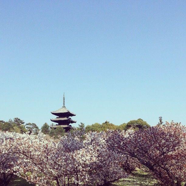 仁和寺 Ninna-ji Temple in 京都府