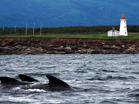 Things to do in Cape Breton