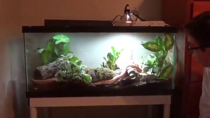 Self cleaning corn snake enclosure!