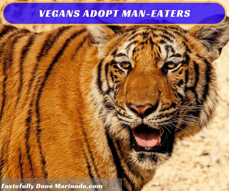 See the video of these #man-eating tigers. And ask some #Vegans to adopt one or two!  http://www.smithsonianmag.com/science-nature/man-eaters-of-tsavo-11614317/?utm_content=buffer9a432&utm_medium=social&utm_source=pinterest.com&utm_campaign=buffer #Wild #Wildgame