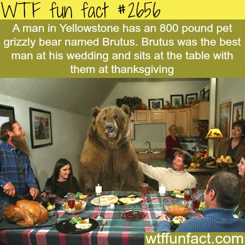 Brutus the Bear and His Man Friend Casey -WTF funfacts