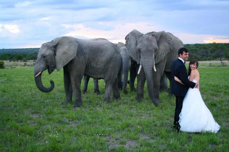 Wedding at Antelope Park.