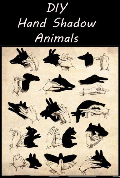 DIY : Hand Shadow Animals. Fun information. Would make for a fun #homeschool break activity!