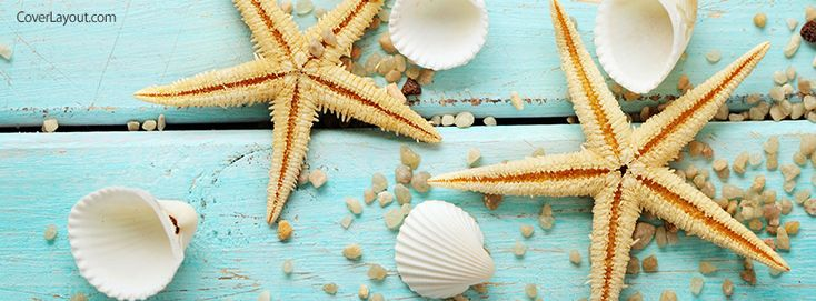 Seashells and Starfish Facebook Cover coverlayout.com