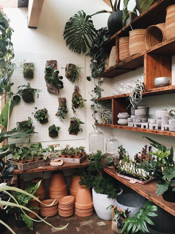 Best 25 Aesthetic Plants Ideas On Pinterest Plant