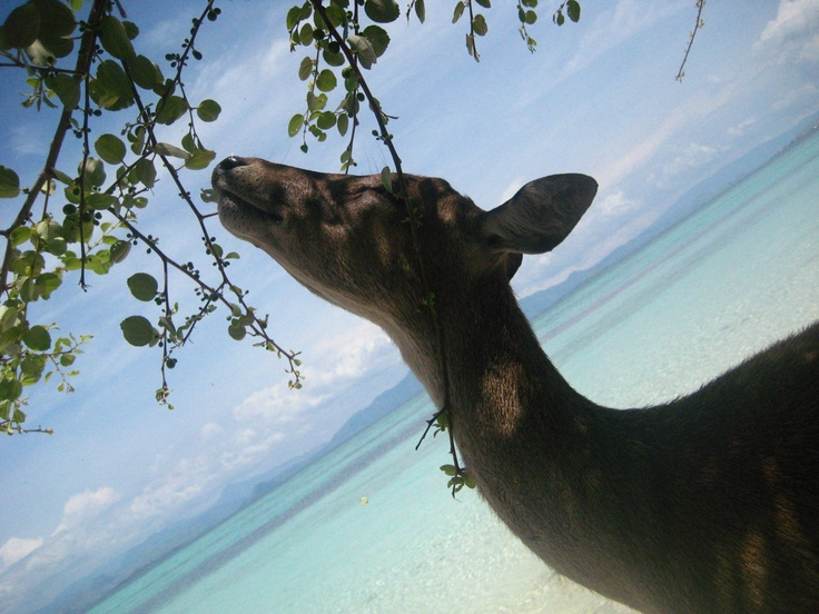 Mmm... Smells good. Pulau Kanawa, Flores