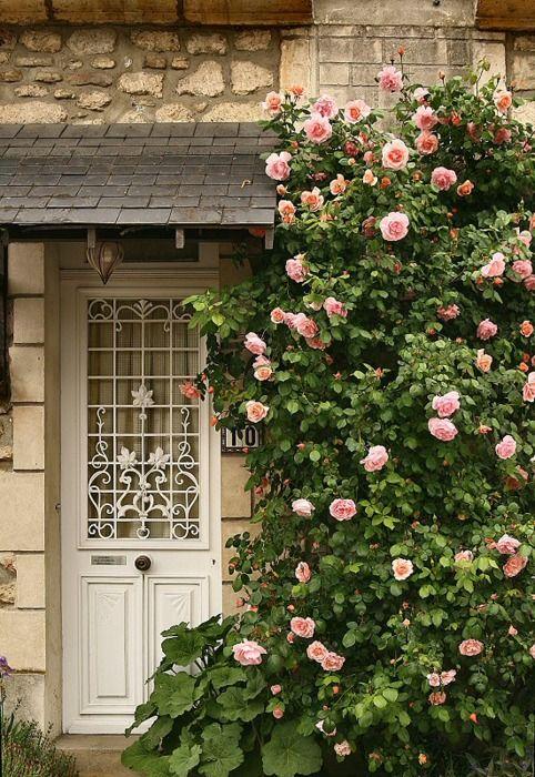 El perfume de las rosas al abrir la puerta...                                                                                                                                                                                 Mais