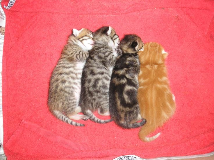 Mia's kittens