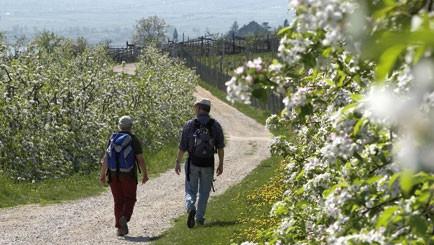 Spargelwandern in Südtirol - Blütezeit am Kalterer See - NEU, Genusswandern, Italien,