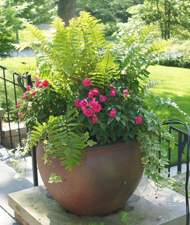 "Planter Option 1- (13)Macho Ferns (or other planting) with colorful annuals in dark large terra cotta ""style"" pot. (found nice affordable planters at Costco)"