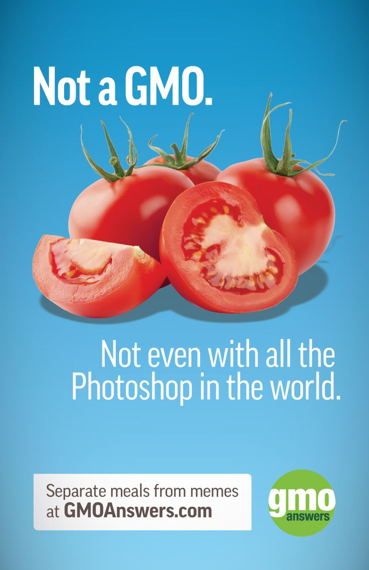 There aren't any GMO tomatoes on the market. The last GM tomato on ...