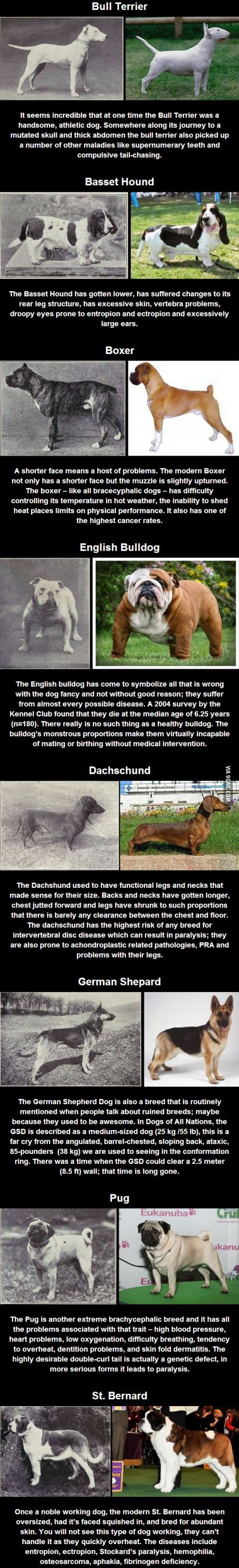 100 years of selective breeding....