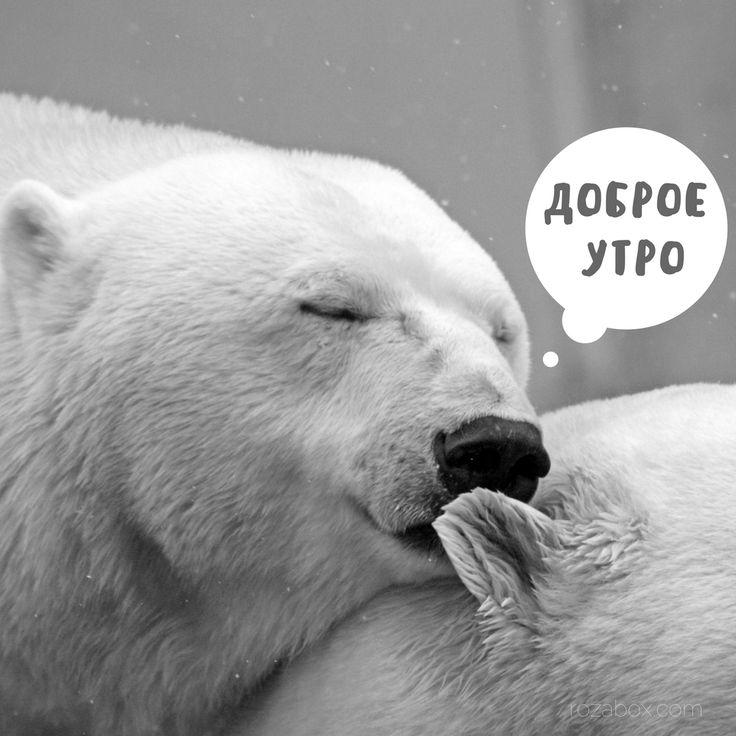 смотреть картинки с добрым утром медведями с-х