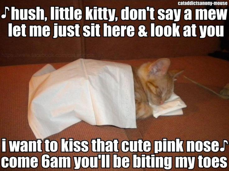 a little kitty lullaby