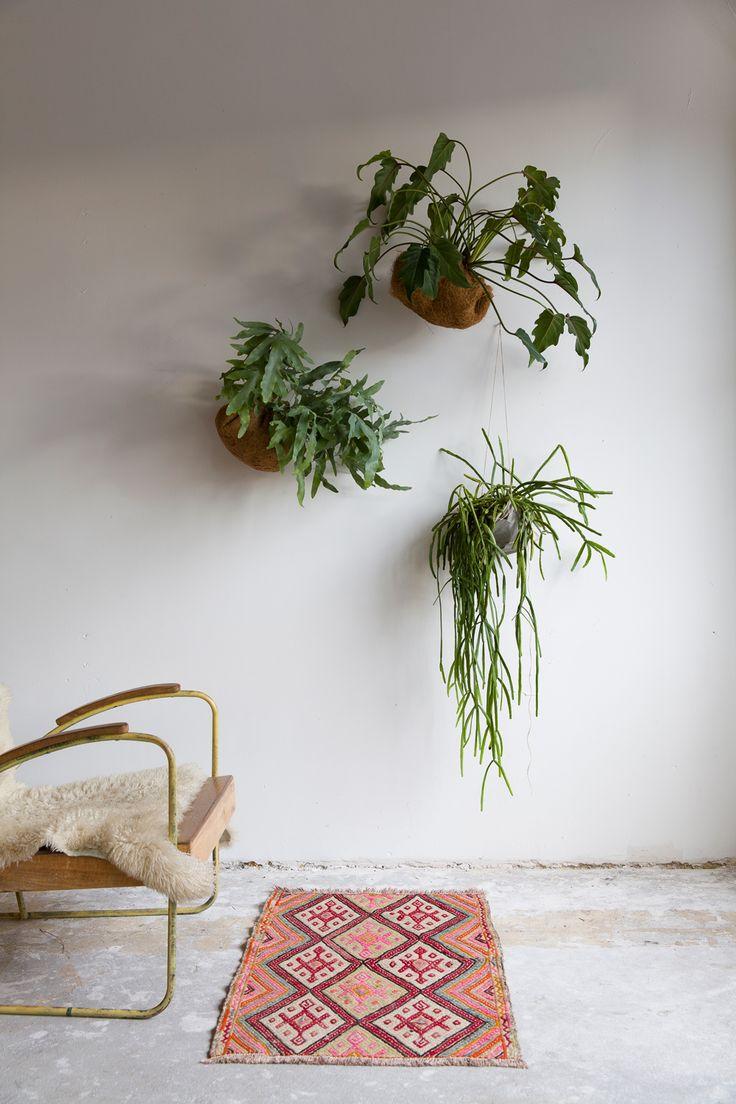 Cactussen en vetplanten lijken stugge types, maar als je ze een beetje handig neerzet zijn het juist enorme sfeermakers. Plantenlabel cabloom.nl inspireert tot een groener huis met planten, cactussen, terrariums, stolpen én tips hoe je dat allemaal kunt stylen, zoals met schalen en ophangconstructies.