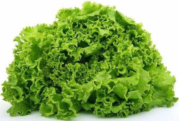 Салат выращивание открытый грунт