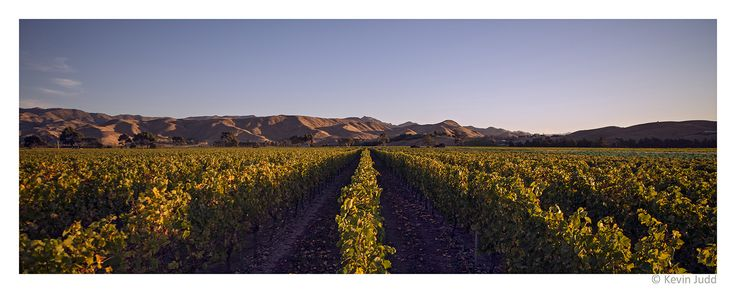 Wrekin Vinyard, Brancott Valley in Marlborough, New Zealand