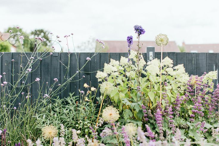 An Urban Garden With Chickens - Image By Adam Crohill