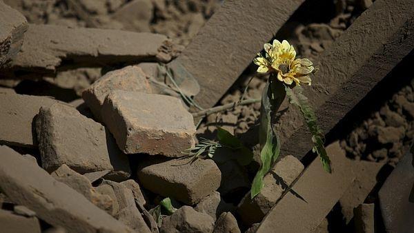 Květina mezi troskami domu v nepálském městě Bhaktapur