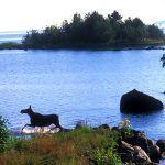 Brändön Guided Nature Walk