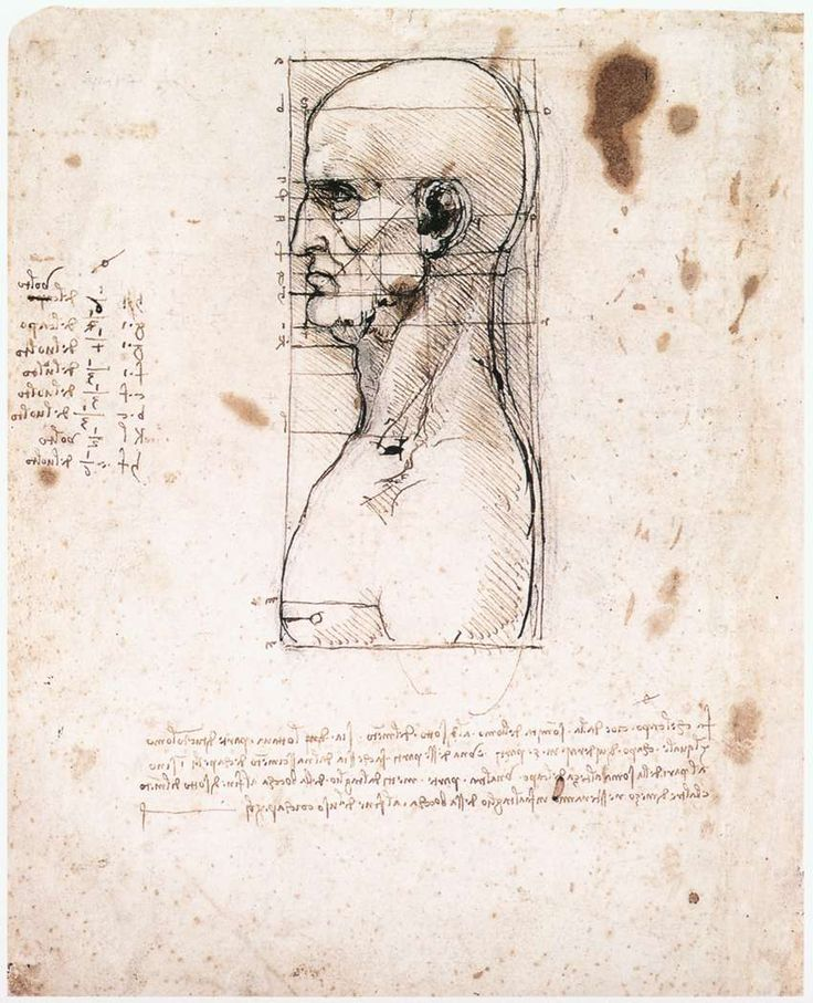 Male head in profile with proportions Pen and ink on paper, 280 x 222 mm Gallerie dell'Accademia, Venice