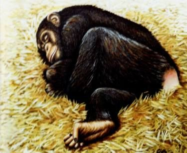 Chimpanzee sleeping, Copenhagen Zoo, Denmark