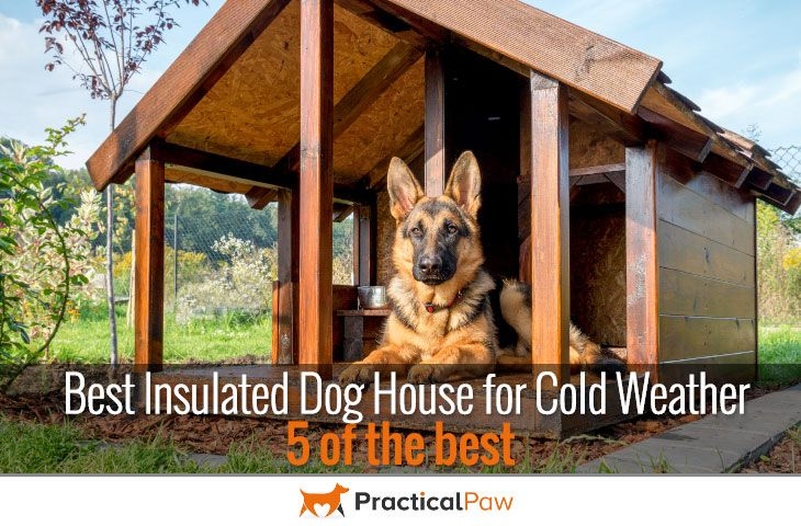 Best 25 insulated dog houses ideas on pinterest for Best insulated dog house for cold weather