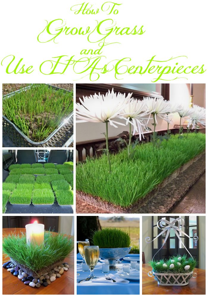 Miss Kopy Kat blog...How to grow real grass in containers for decorating the inside of your home or for a party centerpiece. Lots of ideas of ways to use the real grass.
