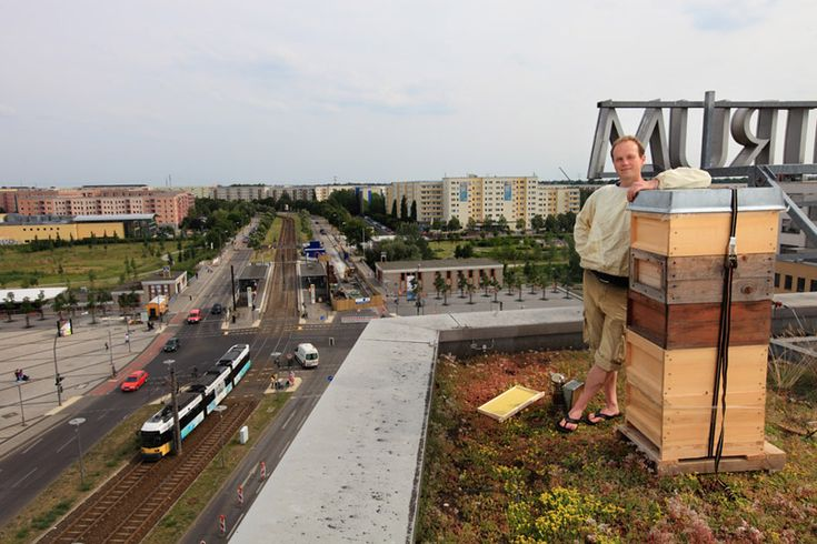 Bee hives on top of the world in Berlin, Germany: Bees Hives, Urban Beekeeping, Green Town, Bee Hives, Skep Bees, Creatures Comforter, Green Cities, Gardens, Roof Tops Vegetables