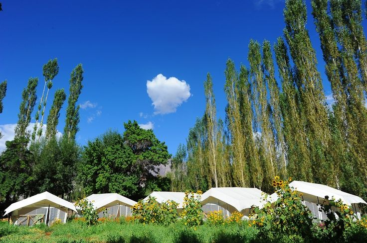 Mystique Meadows Camp Ladakh Hotels