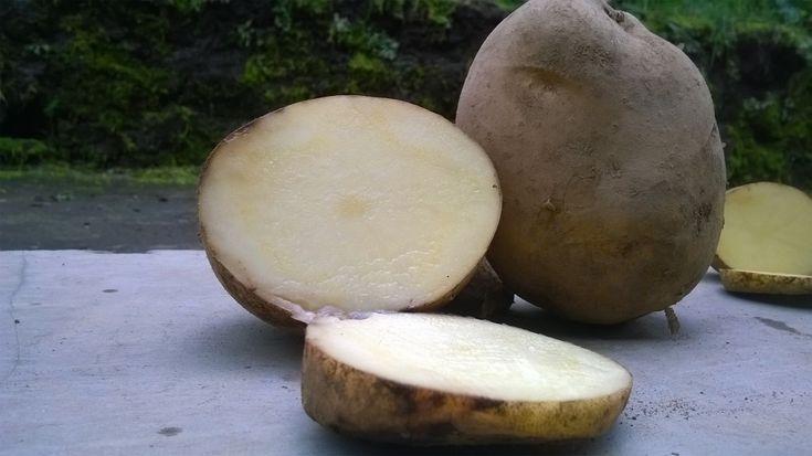 kenali perbedaan kentang dieng dengan redskin
