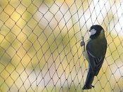 Használjon ön is védőhálót,ha elege van a kertjét állandóan ellepő madarakból. Könnyen elhelyezhető, illetve eltávolítható és többször is felhasználható.  http://www.a-necc.hu/vedohalok-madarak-ellen.htm
